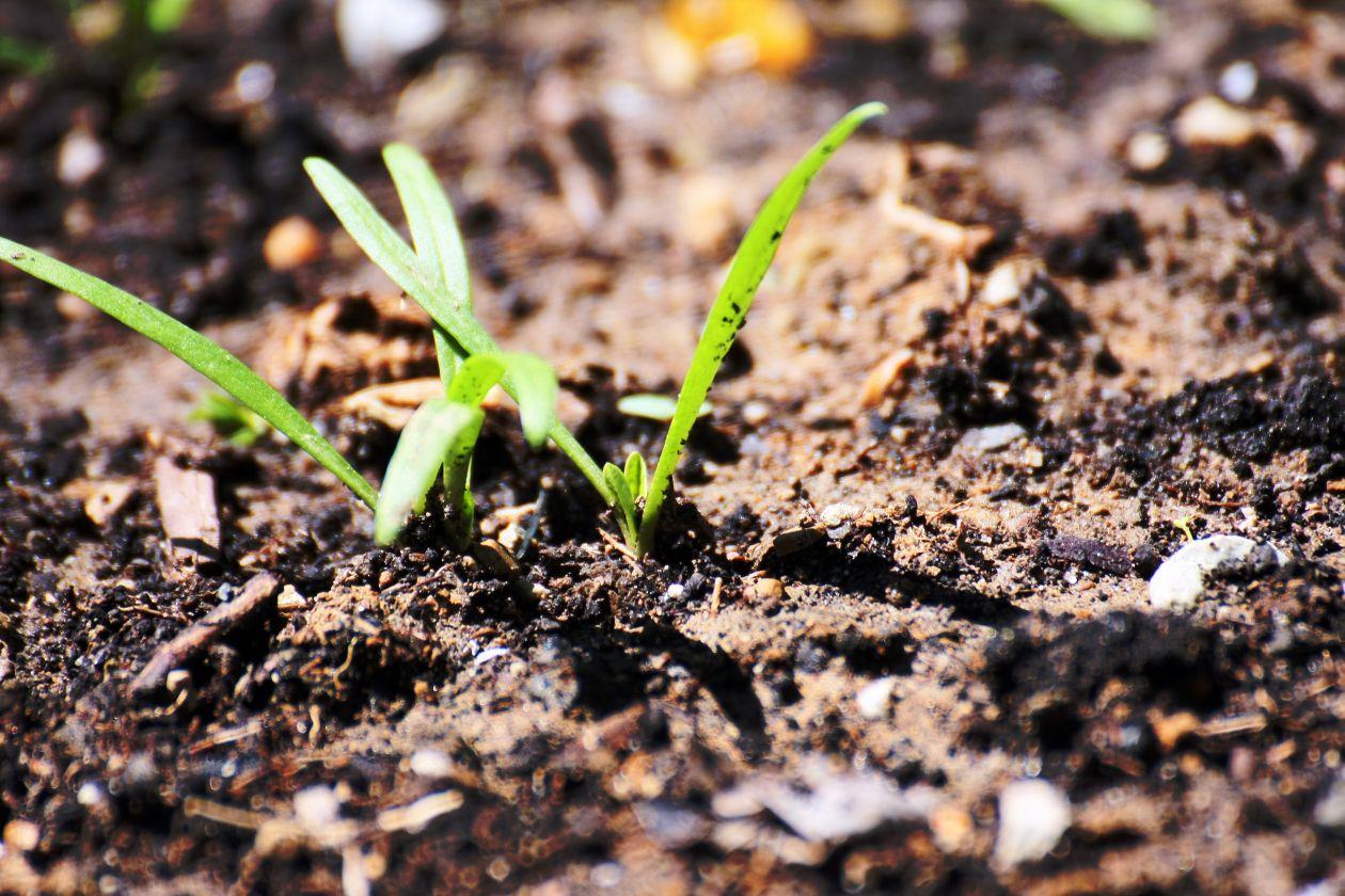 das neue Leben sprosst unaufhaltsam! The new life after the new birth!